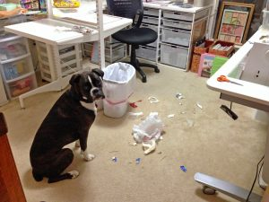 Author's dog in craft room